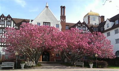 View Photo - Cherry blossoms outdoor Montauk Manor