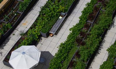 View Photo #1 - SCGP Rooftop Garden